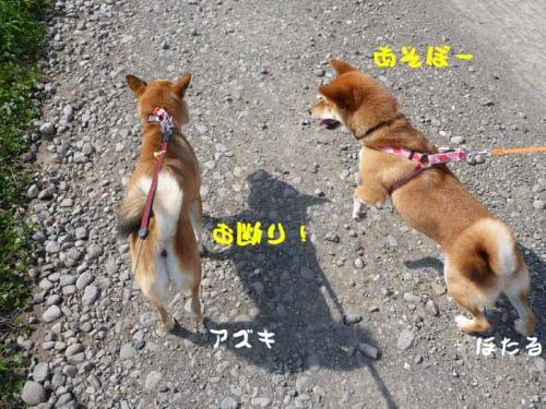 P1280881-AZUKI.jpg