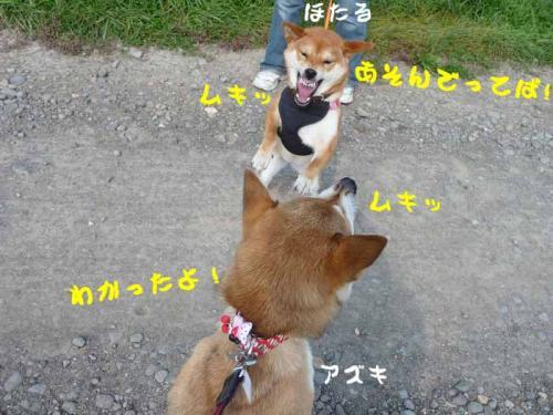 P1280883-AZUKI.jpg