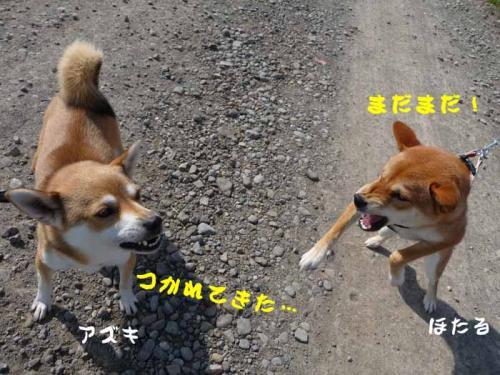 P1280886-AZUKI.jpg