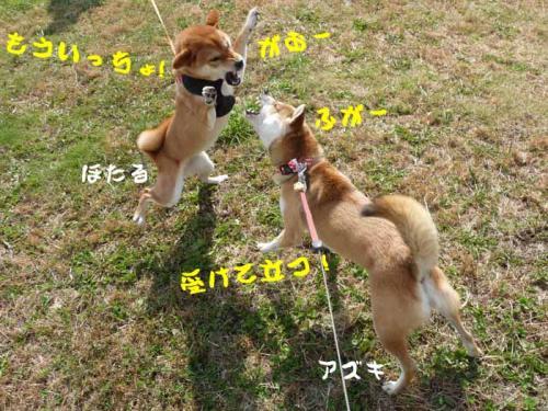 P1280890-AZUKI.jpg