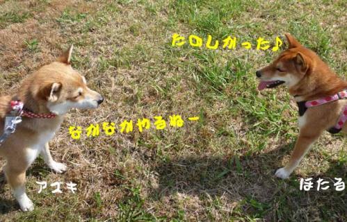 P1280891-AZUKI.jpg