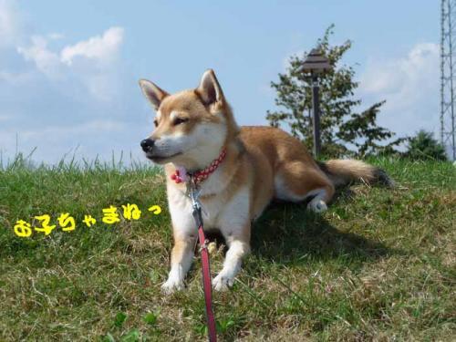 P1280899-AZUKI.jpg