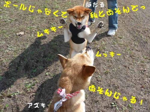 P1280905-AZUKI.jpg