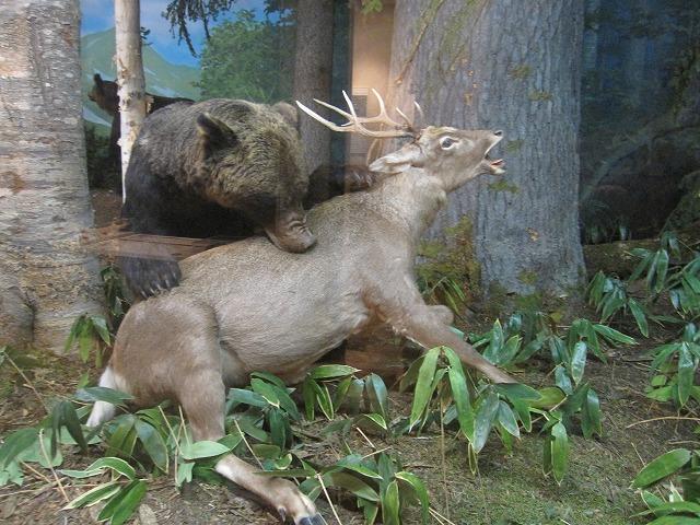 クマとシカ
