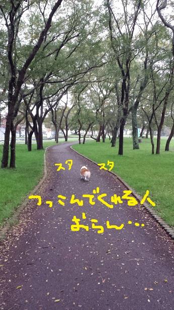 20141109-9.jpg