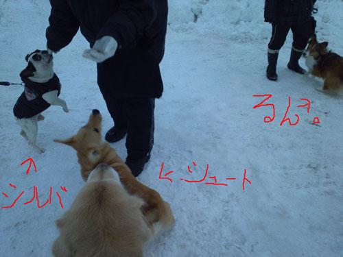 d-013_20130120095021.jpg