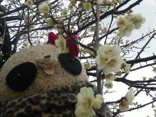 梅の花とおばぶ