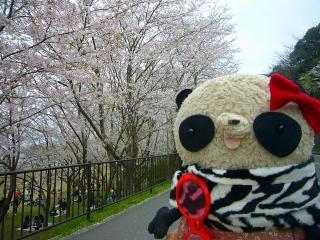ばぶちゃん2010年のお花見