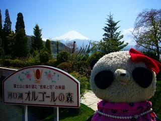 やっと富士山とご対面