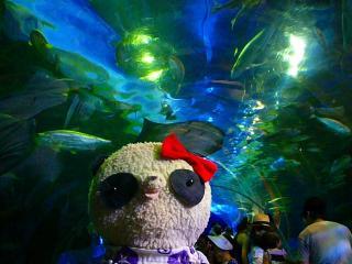 水族館のお魚トンネル