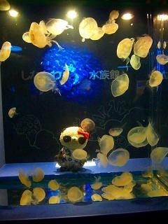 おクラゲ様と記念撮影