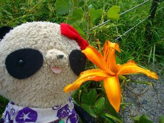 ゆりの花とパチリ