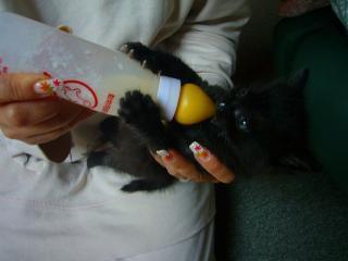 ミルクを飲むモフモフ