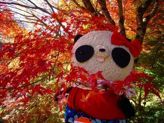 2010ミス紅葉ばぶちゃん