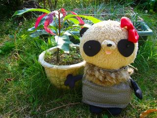 マンゴーおばぶ秋の装い
