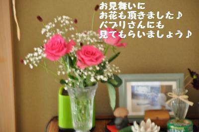 001_convert_20110725222558.jpg