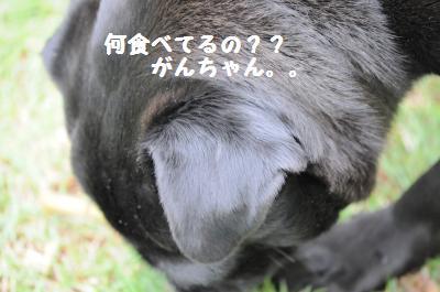 002_convert_20110611162618.jpg