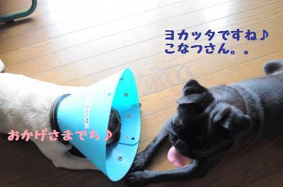 002_convert_20110704163118.jpg