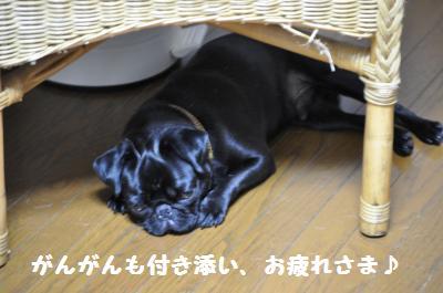 002_convert_20110707193012.jpg
