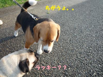 003_convert_20110606132625.jpg