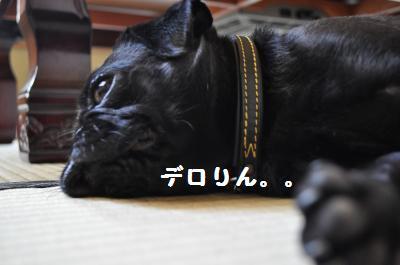 003_convert_20110821085620.jpg