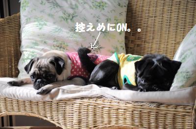 003_convert_20111028214408.jpg