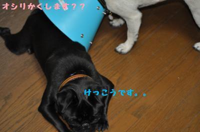004_convert_20110706202509.jpg
