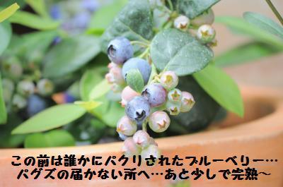 005_convert_20110610201614.jpg