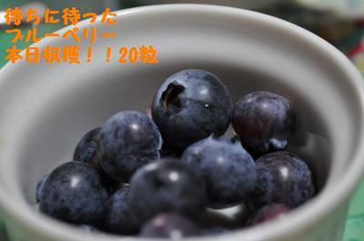 006_convert_20110614221125.jpg