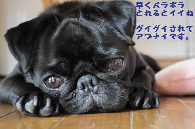006_convert_20110704163652.jpg