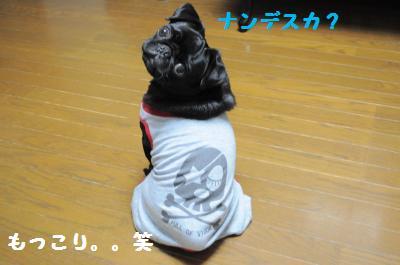 008_convert_20111021213745.jpg