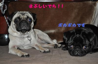 008_convert_20111110221011.jpg
