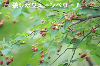 009_convert_20110610200216.jpg