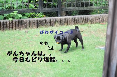 009_convert_20110702190630.jpg