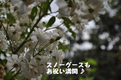 009_convert_20110718215651.jpg