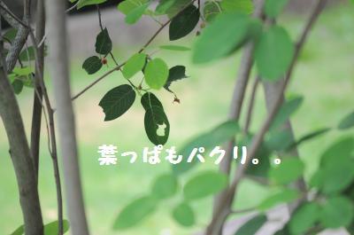 010_convert_20110610201520.jpg