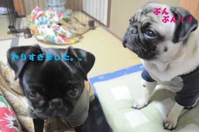 010_convert_20120129222425.jpg