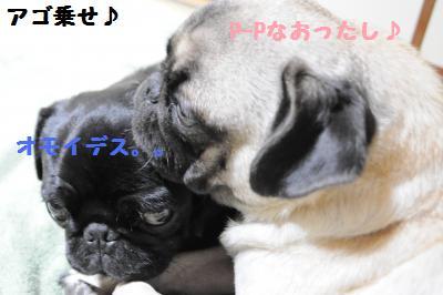 012_convert_20111018000543.jpg