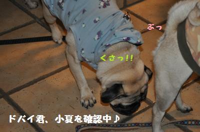 012_convert_20111122010032.jpg