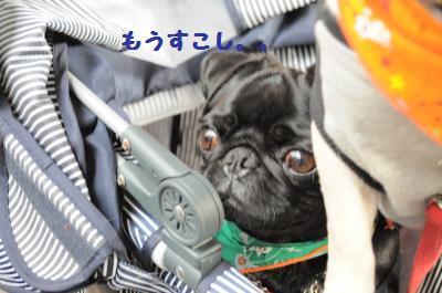 013_convert_20110924192831.jpg
