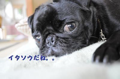 015_convert_20110911132205.jpg
