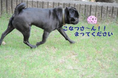 017_convert_20110724191109.jpg