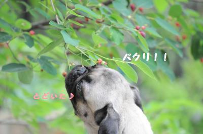 018_convert_20110610200505.jpg