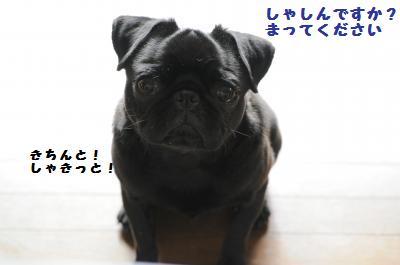 018_convert_20110611163050.jpg