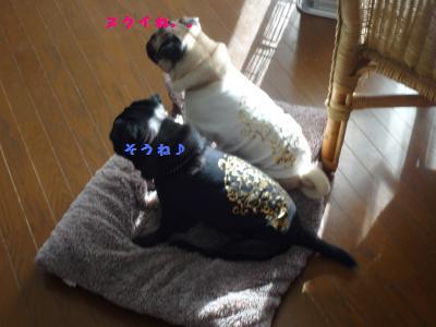 020_convert_20111213091728.jpg