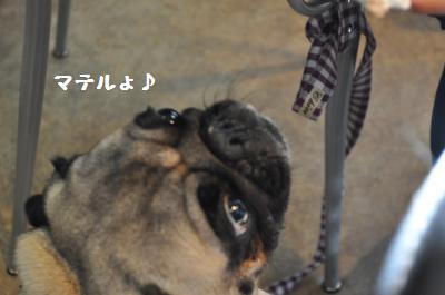 022_convert_20111230001002.jpg