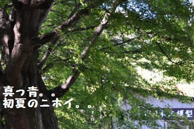 023_convert_20111101000744.jpg