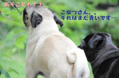 025_convert_20110610200957.jpg