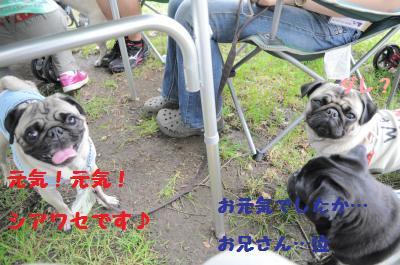 029_convert_20110607090352.jpg
