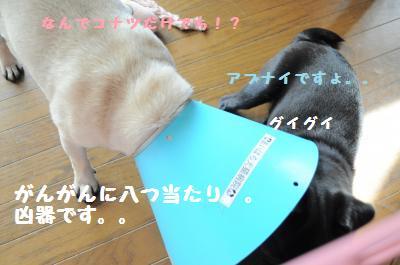 030_convert_20110701223602.jpg
